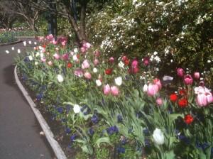 Springtime in Sydney, Australia
